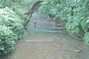 Fly fishing Boiling Springs Creek